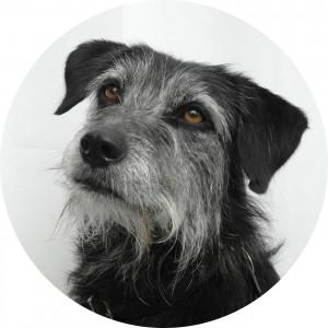 Bürohund Maria